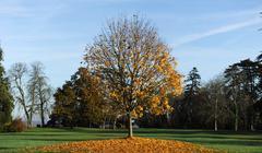 Arbre en automne Stock Photos
