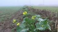 Autumn morning  mist on field Stock Footage