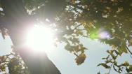 Sun and tree trunk Stock Footage