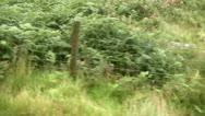 Stock Video Footage of Snowden railway ascent fence and ferns