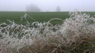 Autumn landscape with first frost and mist Stock Footage