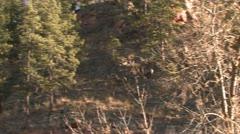 P02440 Bighorn Sheep Rams Chasing Ewe During the Breeding Season Stock Footage