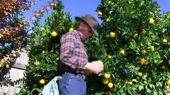 Farmer, orange grove - stock footage