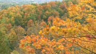 Stock Video Footage of autumn - tree - leaves - wind-hillside 001