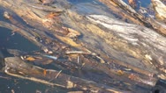 Stock Video Footage of Driftwood in river