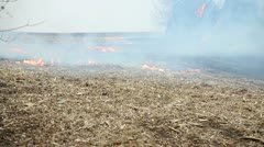 Fire creeping along ground Stock Footage