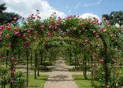 Pergola in a french garden Stock Photos