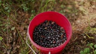 Bucket with blueberries Stock Footage