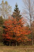 Colours of the fall - stock photo