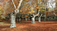 Autumn O Stock Footage
