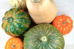Squashes. - stock photo
