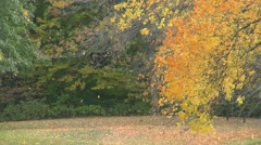 Field trees - blowing leaves -003 Stock Footage