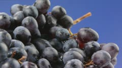 Stock Video Footage of Grapes on blue background.