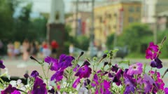 Petunia flowers and walking people in city park - stock footage
