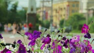 Petunia flowers and walking people in city park Stock Footage
