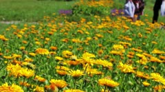 Calendula flowers and walking people in city park Stock Footage