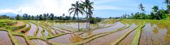 rice terrace pano - stock photo