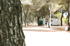 tree in the forest and caravan - stock photo