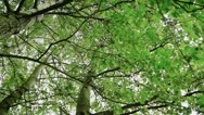 Stock Video Footage of Green Tree