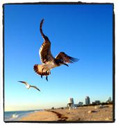 Seagull over South Beach, Miami, Florida Stock Photos