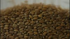 Wheat kernels falling Stock Footage