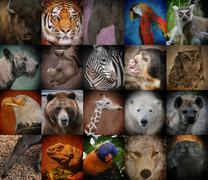 Wild zoo animal squares Stock Photos