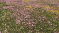 A field of wild flowers Stock Footage