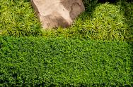 Green grass background with big stone and bush Stock Photos