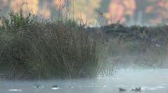 Pond mist Stock Footage