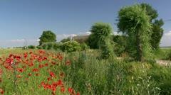 Beautiful Poppy Field on Darss Peninsula - Baltic Sea, Northern Germany Stock Footage