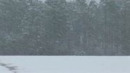 Snow Storm Blizzard Stock Footage