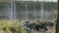 Pond mist2 Stock Footage