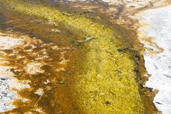 Stock Photo of yellowstone grand tetons geyser