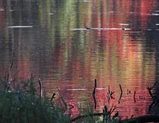 crimson autumn reflection - stock photo