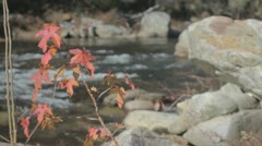 Autumn sweetgum river background Stock Footage