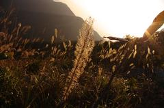Sunshine loistaa ruohoa vuorenrinteellä klo kiina Kuvituskuvat