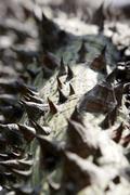 Prickly thorn tree.jpg Stock Photos