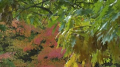 water fall - Autum - pan down - 004 - stock footage
