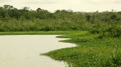 Static shot on the Limoncocha lagoon, natural reserve in Ecuador Stock Footage
