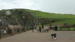 Man walking dogs, Ilfracombe Stock Footage