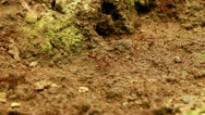 Stock Video Footage of leaf cutter ants, Ecuadorian Amazonia, low angle view