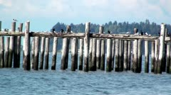 Point Roberts Pier with Birds Stock Footage