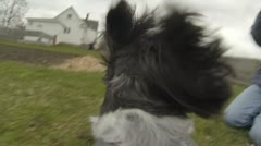 Dog Fetching Flying Toy (Dog's Perspective with GoPro) Version #3 of 6 Stock Footage