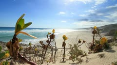 Pioneer Dune Plants on Beach, Whale Trail Stock Footage