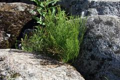 plant growing through the rocks - stock photo
