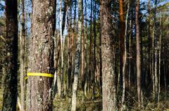 marked tree - stock photo
