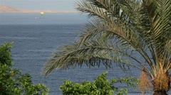 Palm tree in the wind on the backdrop of the red sea. Stock Footage