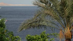 Sailing yachts in the red sea and a palm tree (not in focus) Stock Footage