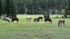 Wild Horses in Field Arkistovideo