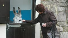 Oap at donkey sancturary, Sidmouth Stock Footage